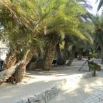 Vai - najsłynniejsza plaża na Krecie